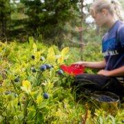 Høstgleder i Land, Søndre Land